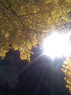 イチョウの樹とライト.jpg
