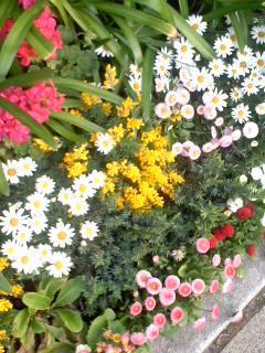 帝国ホテルの花壇.jpg