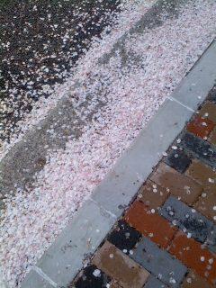 桜吹雪.jpg