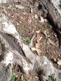 樹の根.jpg