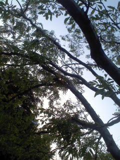 樹の逆光.jpg