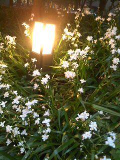 花とライト.jpg