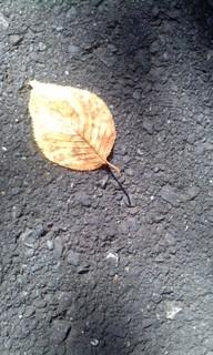 金の葉.jpg