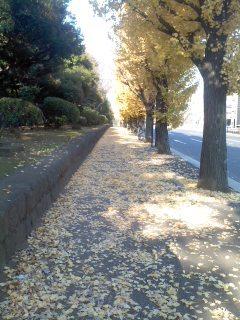 銀杏の道.jpg