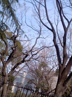 門と樹.jpg